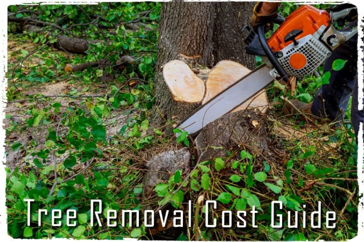 Here is A Complete Tree Removal Cost Guide by Arborists ...