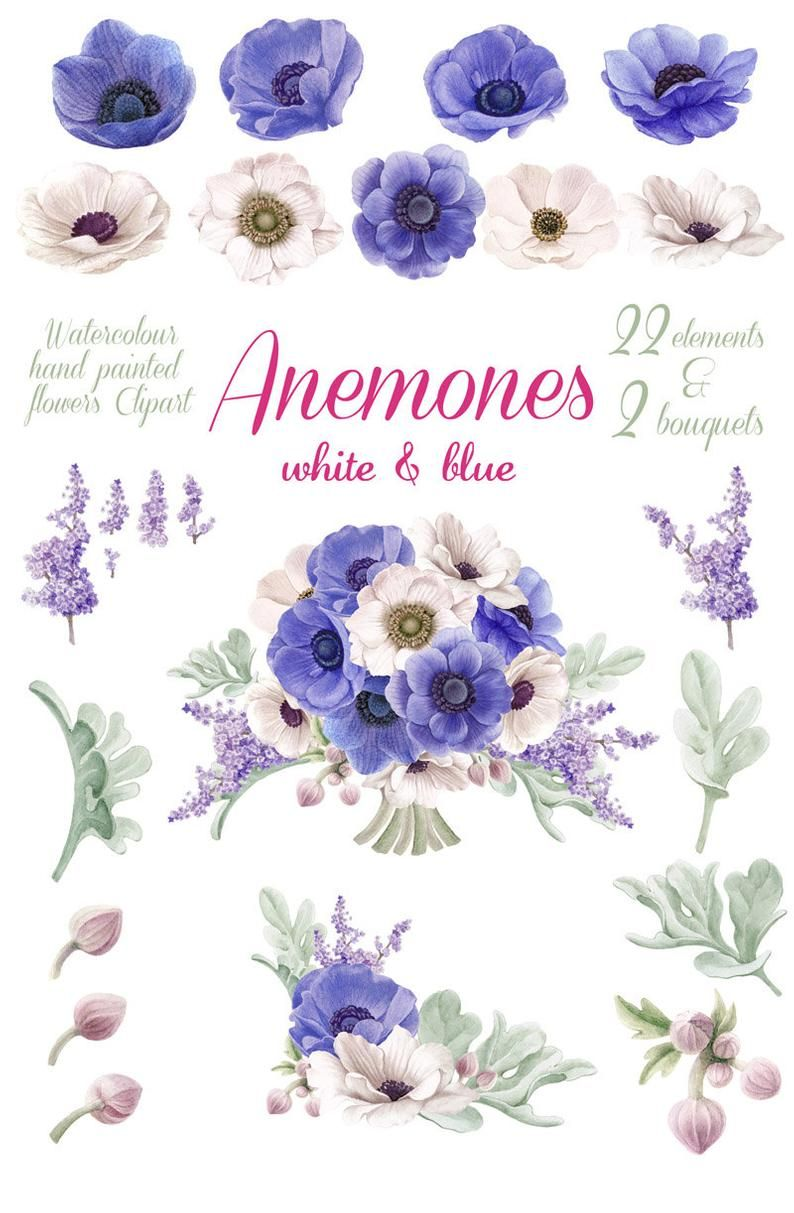 Watercolour Flowers Clip Art White And Blue Anemones Etsy In 2020 Flower Clipart Watercolor Flowers Flower Drawing