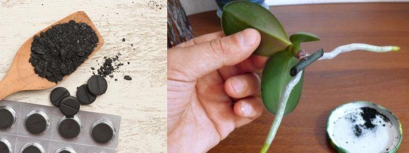 Wegiel Aktywny Fungal Diseases Flower Pots Seedlings