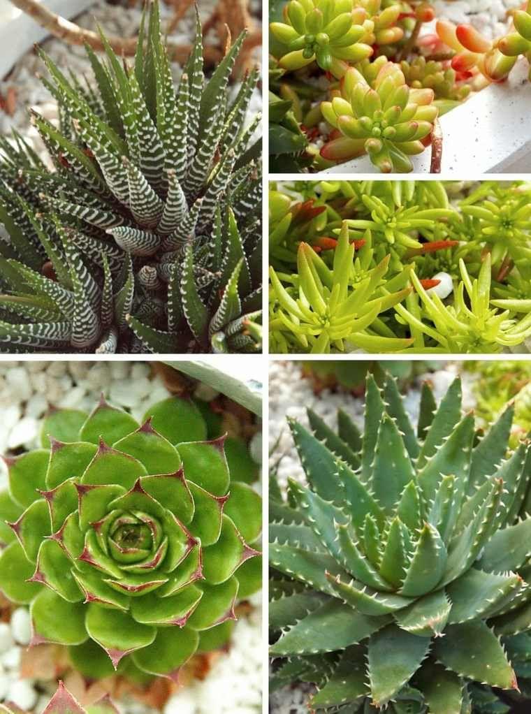 Les Plantes Succulentes Votre Guide Pratique Avec Images