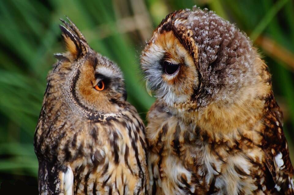 Картинки сов и совят