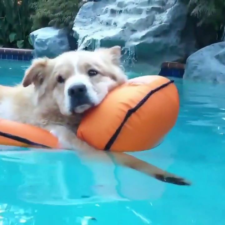 So the dogs Now want a pool...... https://www.facebook.com/hypedojodotcom/videos/1600701186888286/