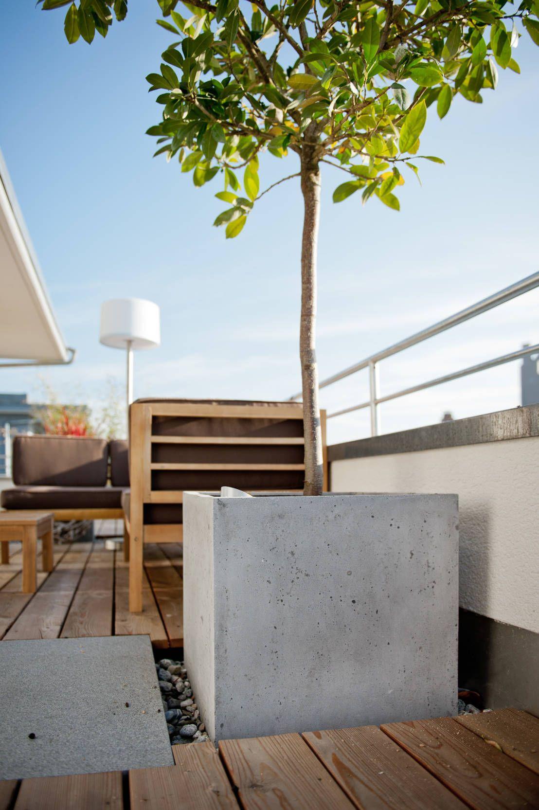 pflanzenkübel aus beton, die nicht nur deinen garten verschönern