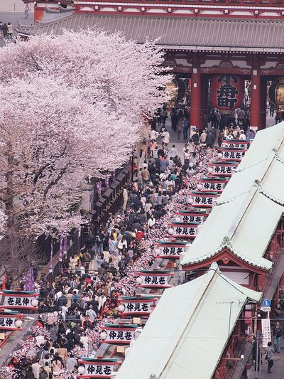 Nakamise Dori (a big shopping street in Asakusa) and the front of Senso-ji in the spring.