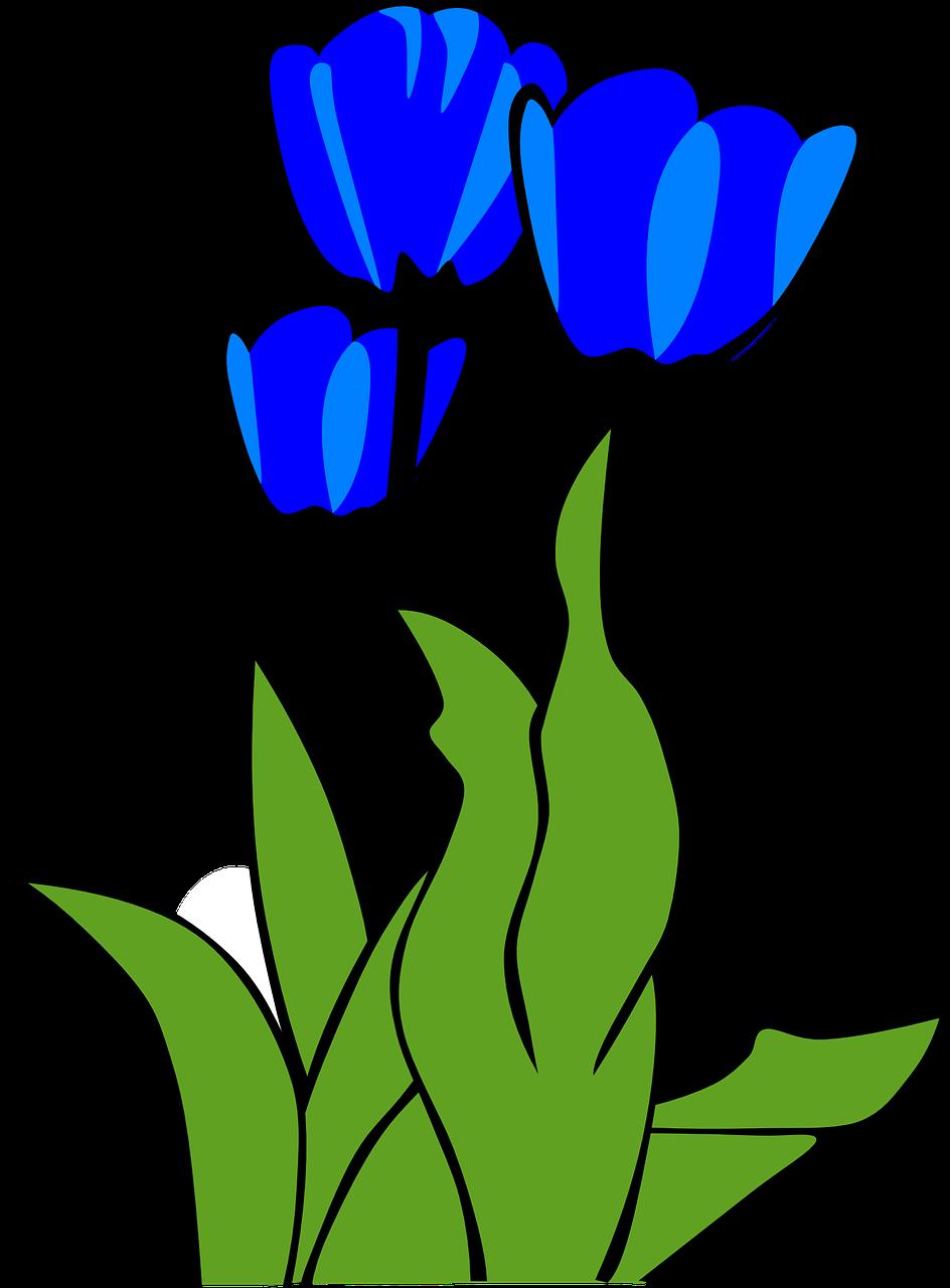 tulips flowers plant leaves transparent image flowers pinterest rh pinterest com