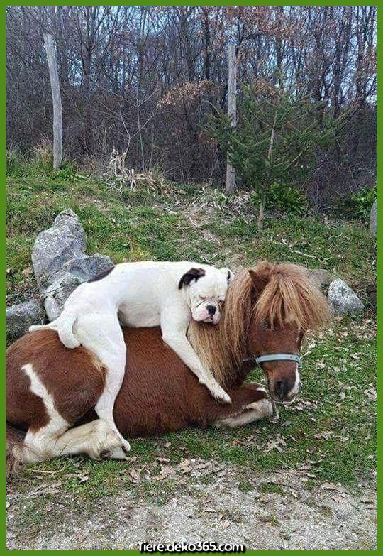 Photo of Increíbles fotos divertidas de animales garantizadas para iluminar tu día