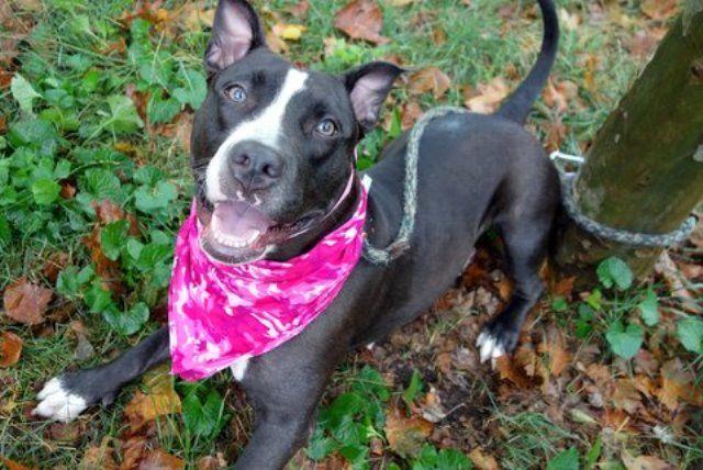 BUBBLE YUMM A1082932 Animals, Nyc dogs, Dog adoption
