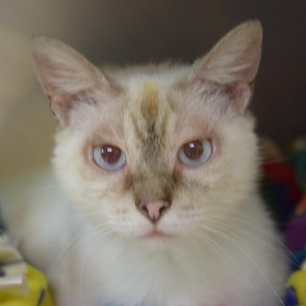 Adopt Sven On With Images Cat Adoption Losing A Dog Help Homeless Pets