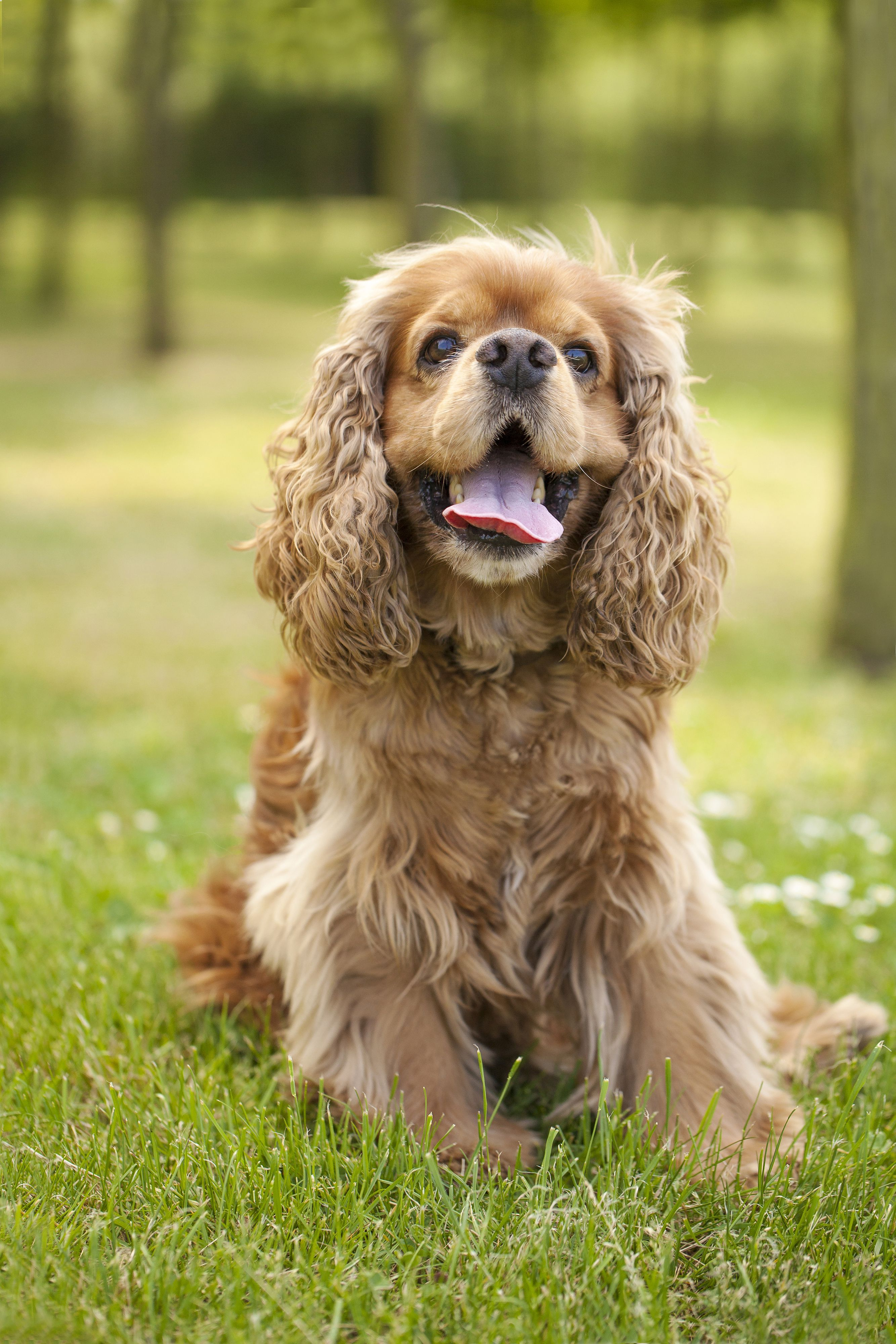 Please visit our website dogs dog breeds puppies dog