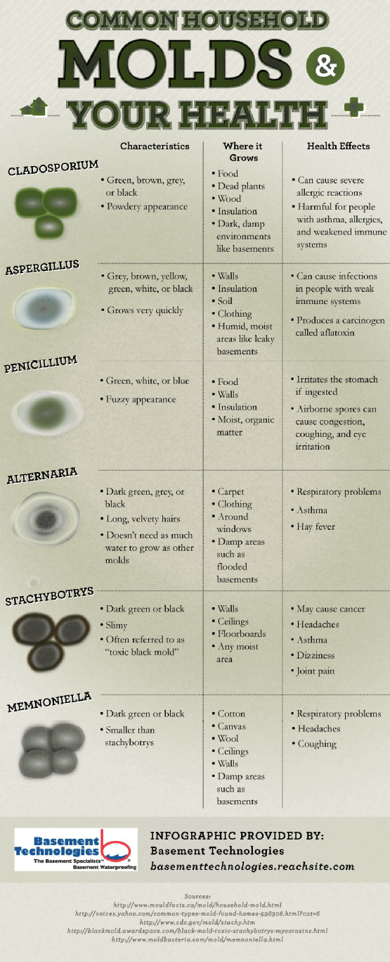 A listing of the different types of mold and associated characteristics and…