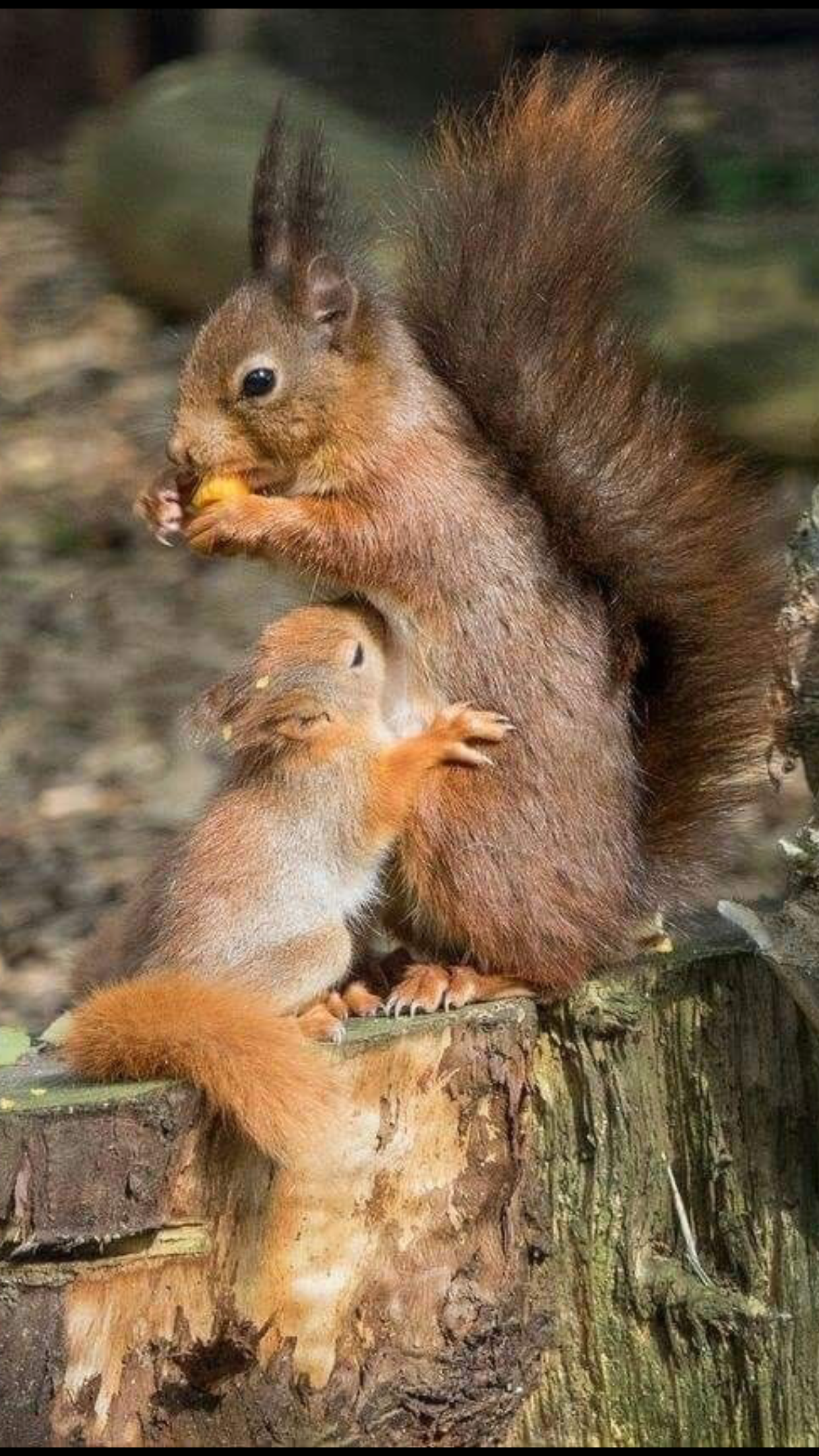 Pin On Squirrel Paint Art