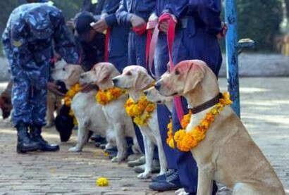 dog festival nepal