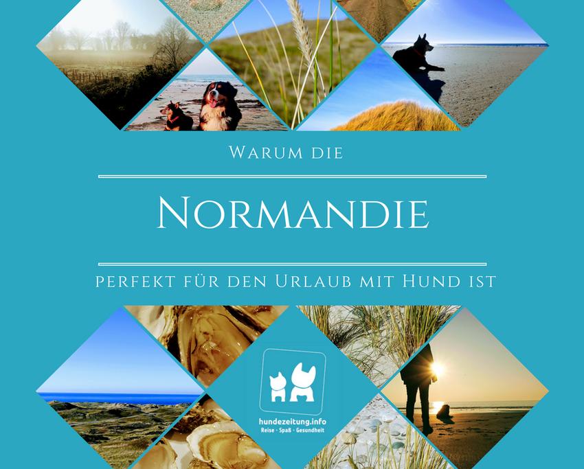 Ein persönlicher Reisebericht über den Urlaub mit Hund in der Normandie.