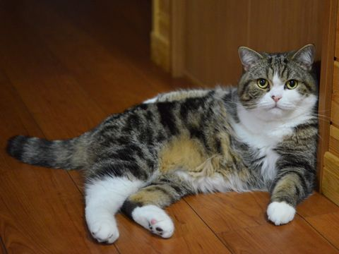 Maru's just chillin' out maxin', relaxin' all cool.