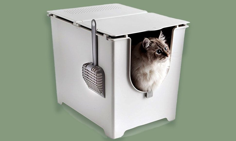 5 Great Litter Boxes That Are Ideal For Small Spaces In 2020 Litter Box Best Cat Litter Best Litter Box