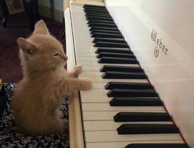 Inicio Twitter Piano Cats Cat Memes