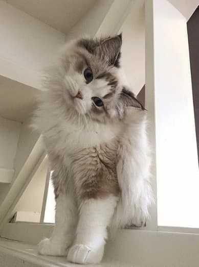 Pin By Gayserili On Kedi Dir Kedi Beautiful Cats Free Cats Sleeping Kitten