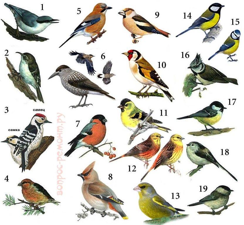 Картинки птичек с названием