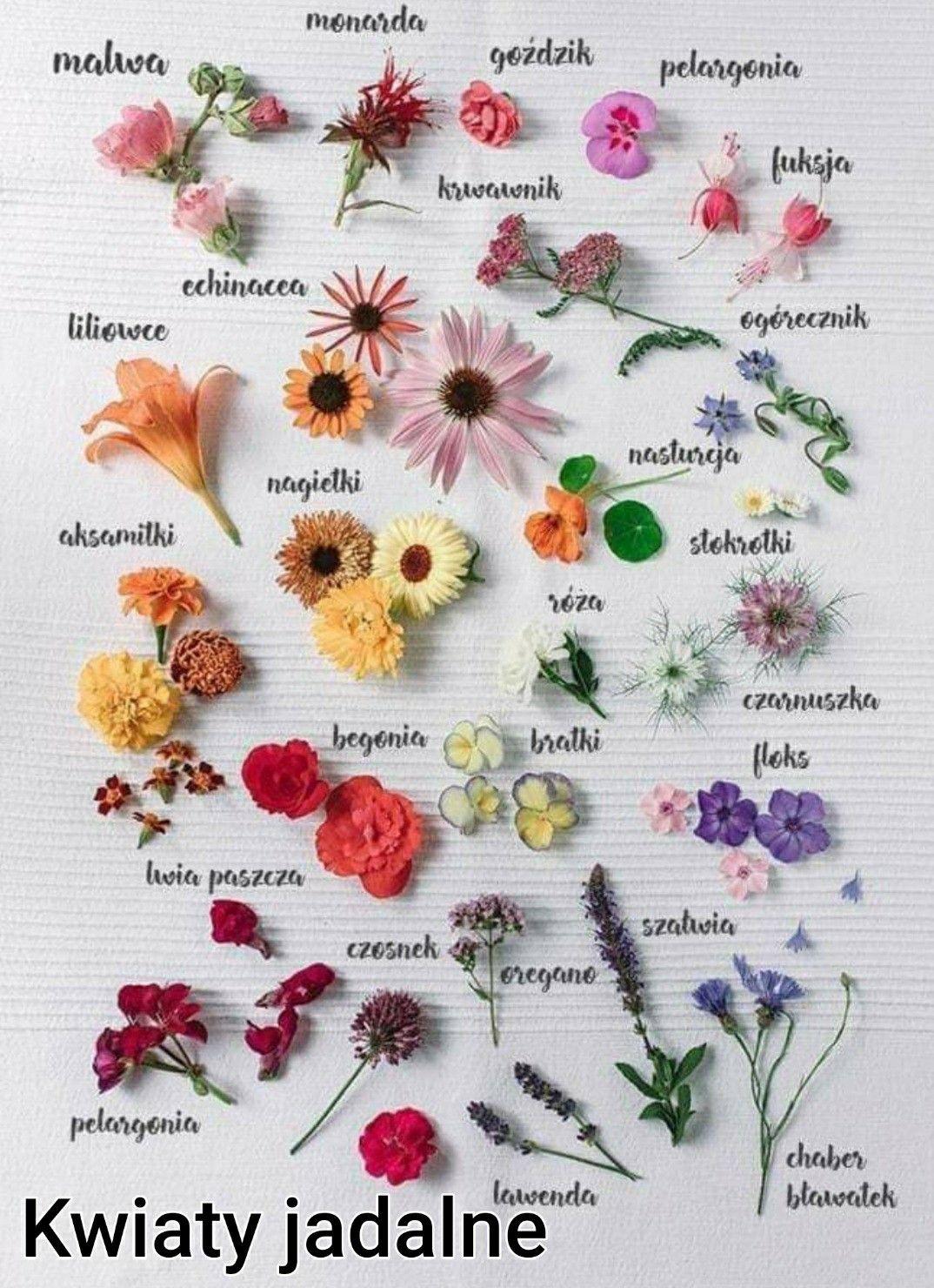 Kwiaty Jadalne Edible Flowers Edible Flowers Cake Flower Food