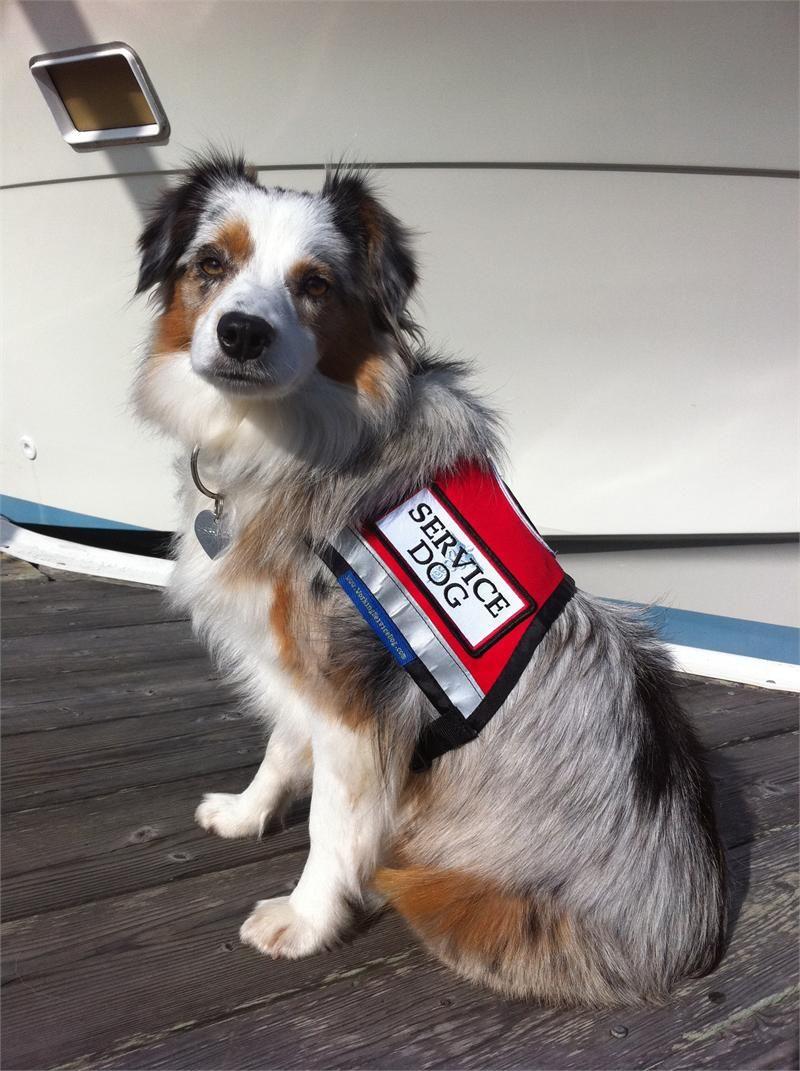 Customizable Service Dog Vest Zipper Pocket & ID Badge