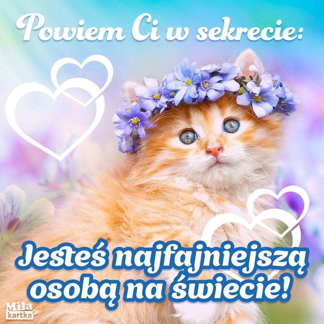 Kartka Z Kotkiem Dziendobry Siema Milosc Pozdrawiam Piekno Kobieta Kotki Koty Kociak Weekend Humor Cute Sentences Humor