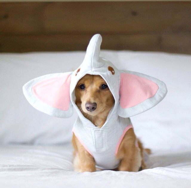 Puppy In A Elephant Costume Puppy Halloween Costumes Cute