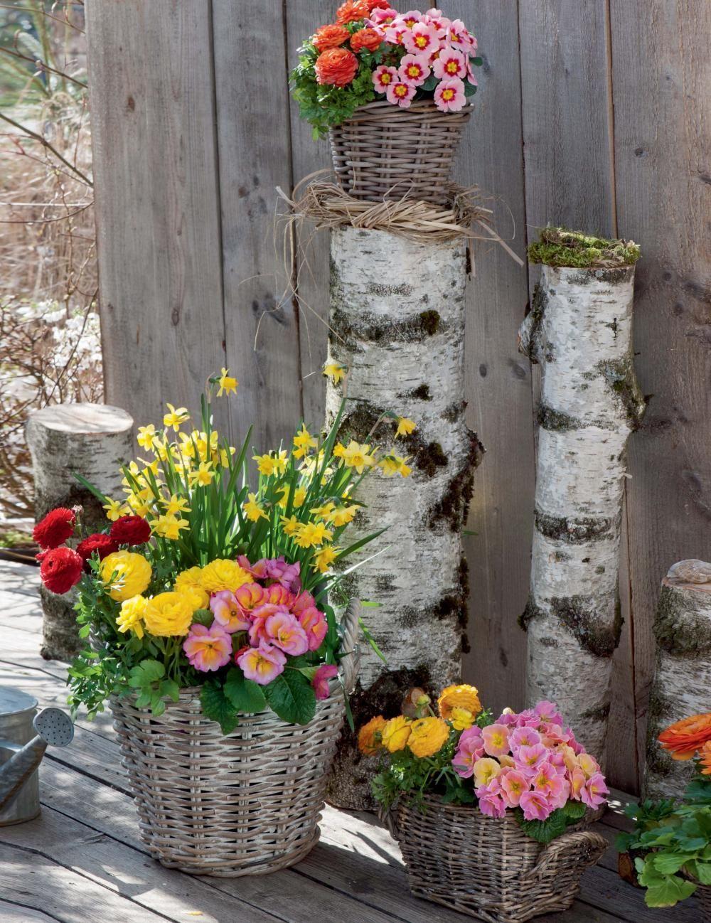 Frühlingsdeko mit Primeln
