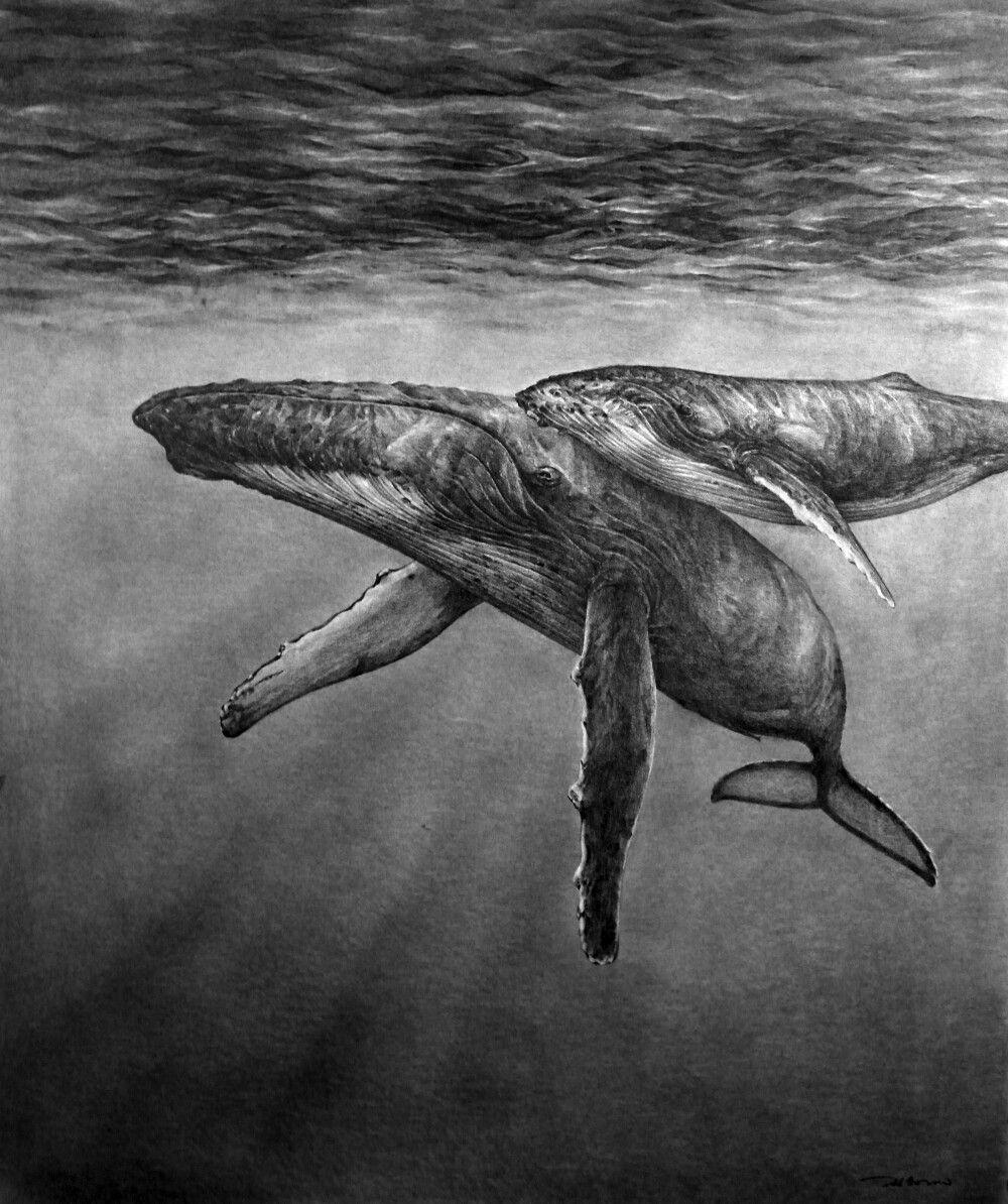 연필스케치 - 혹등고래