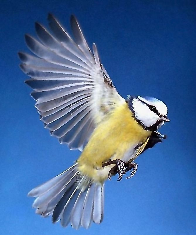 была птички в полете картинки кажется нельзя