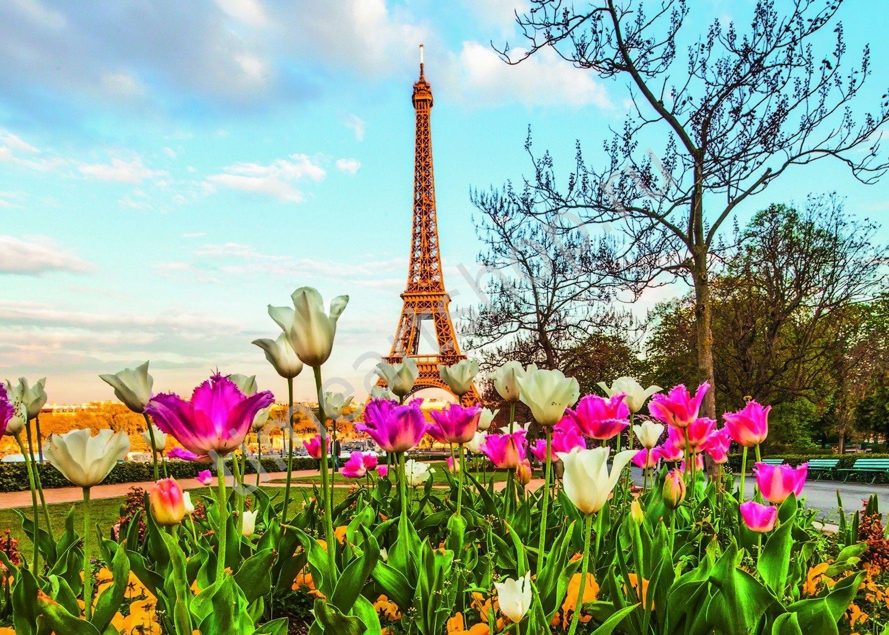 Парижские тюльпаны, картина раскраска по номерам, размер ...