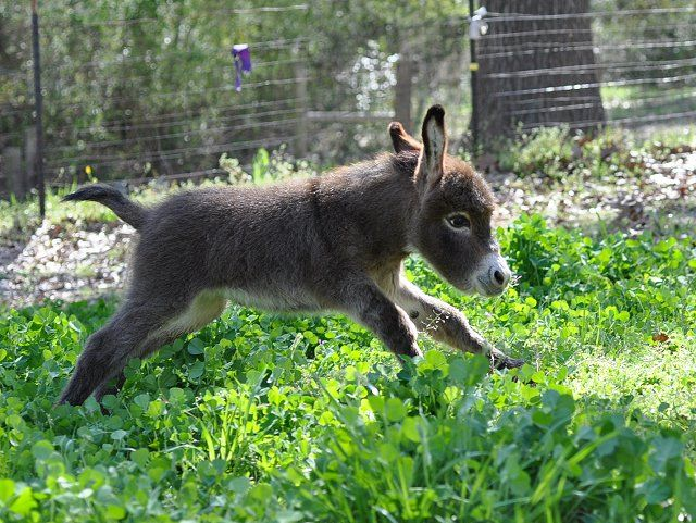 Frolicking donkey. I love donkey!