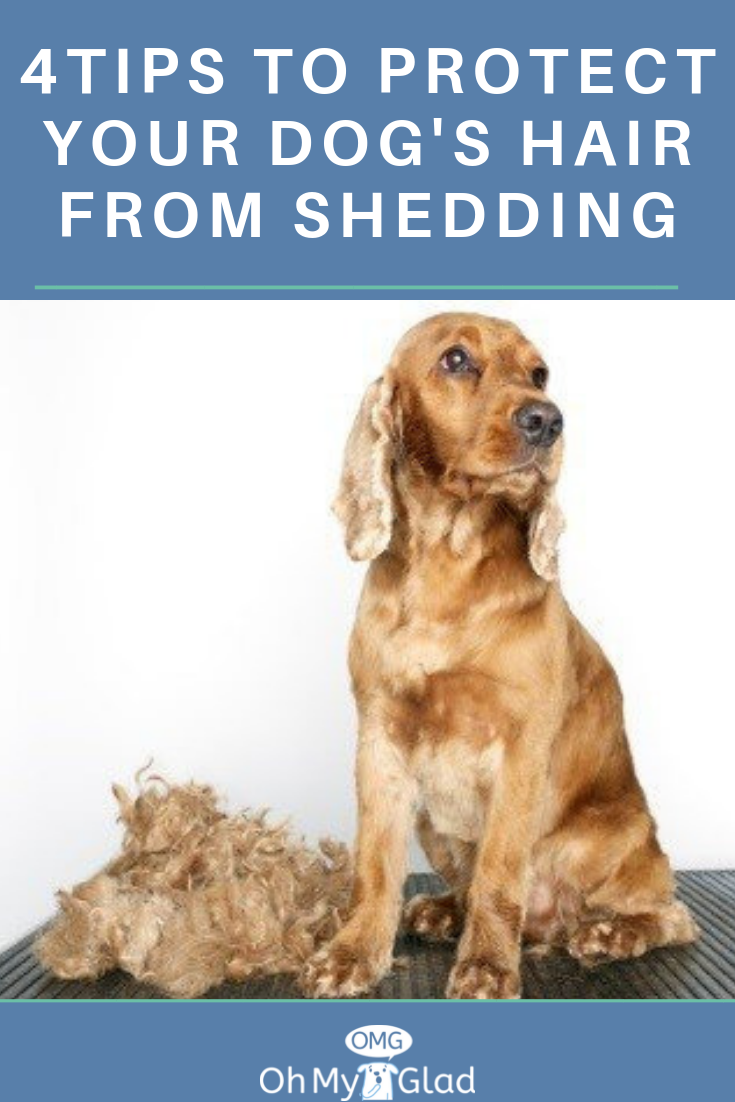 A Quick Way To Deal With Dog Hair Shedding Dogs Dog Hair Dog Shedding