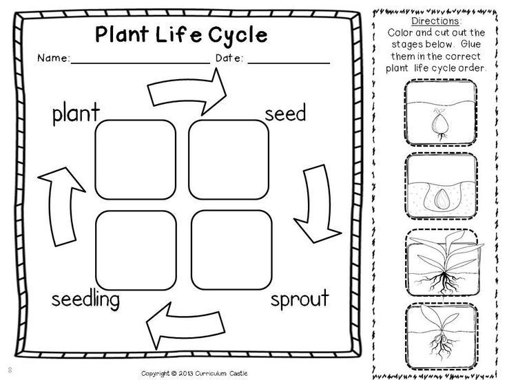 Life Cycle Of A Plant Coloring Page School Plant Life