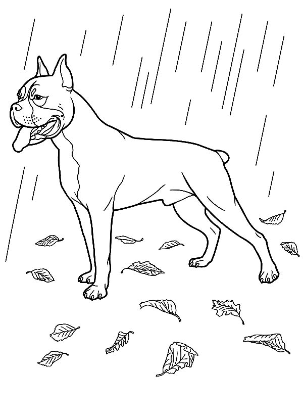 Pin On Boxer Dog Coloring Pages