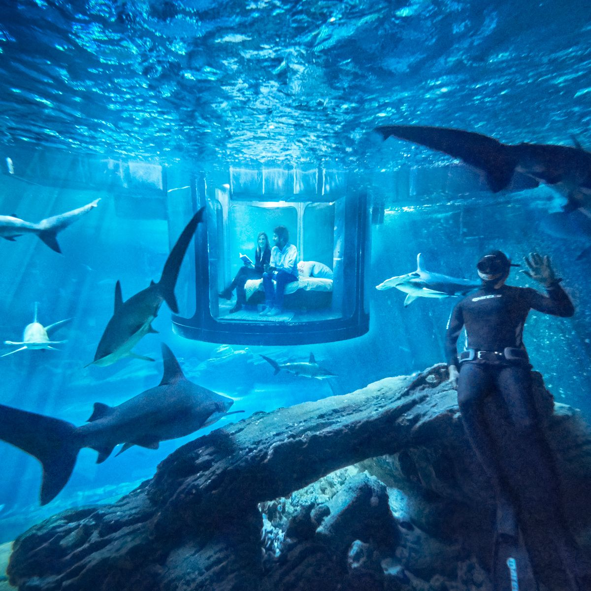 Sleep With Sharks In Gorgeous Glass Walled