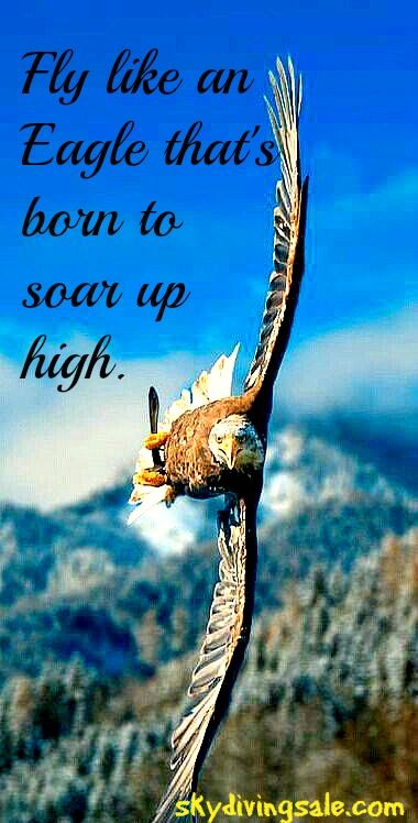 Fly Like An Eagle Thats Born To Soar Up High Quotes Bald Eagle