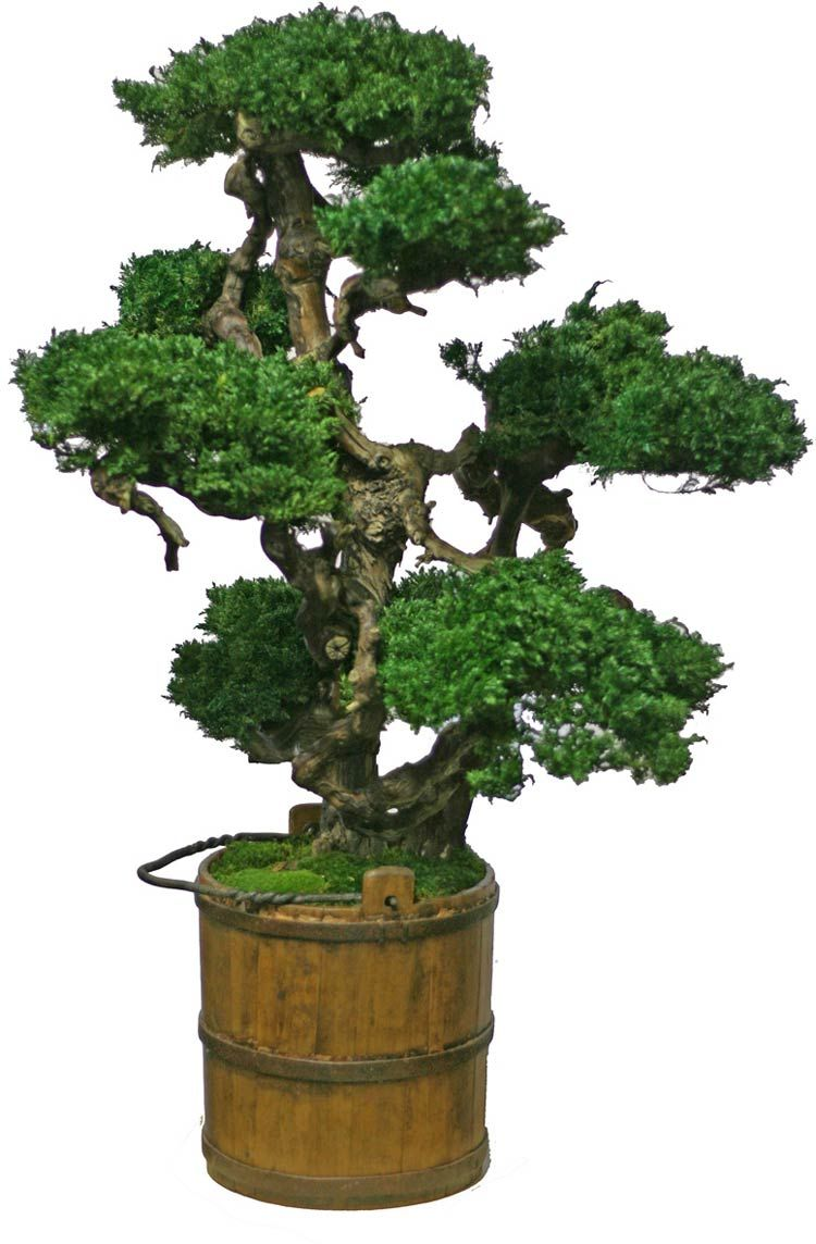 Artificial Bonsai Trees 48 Inch Tall Vintage Senshi Bonsai Bonsai Tree Care Bonsai Tree Indoor Bonsai Tree