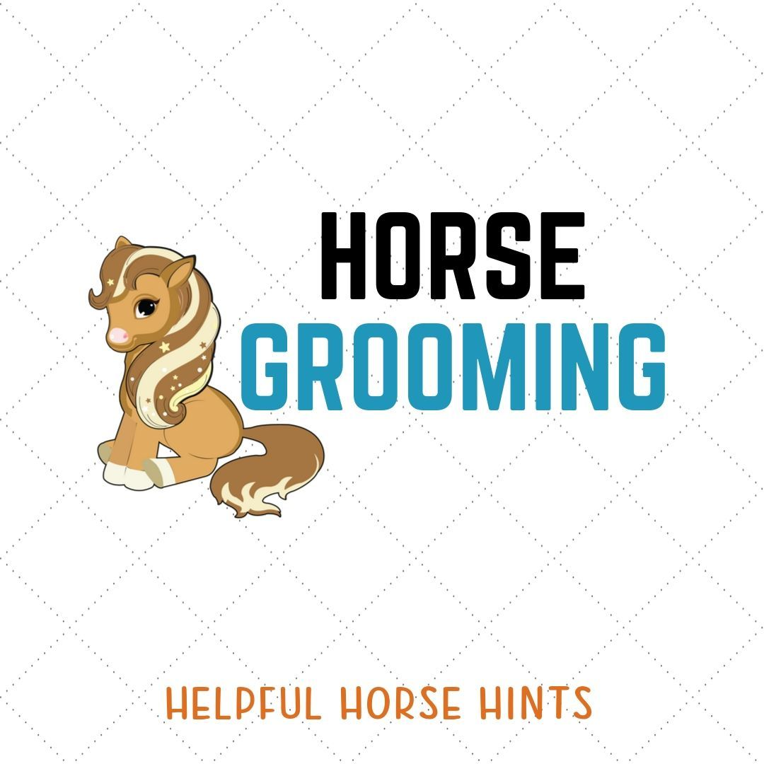 Horse Grooming Tips Tricks Hacks And Ideas For