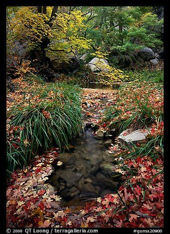Stream in fall, Smith Springs. Guadalupe Mountains National Park, Texas