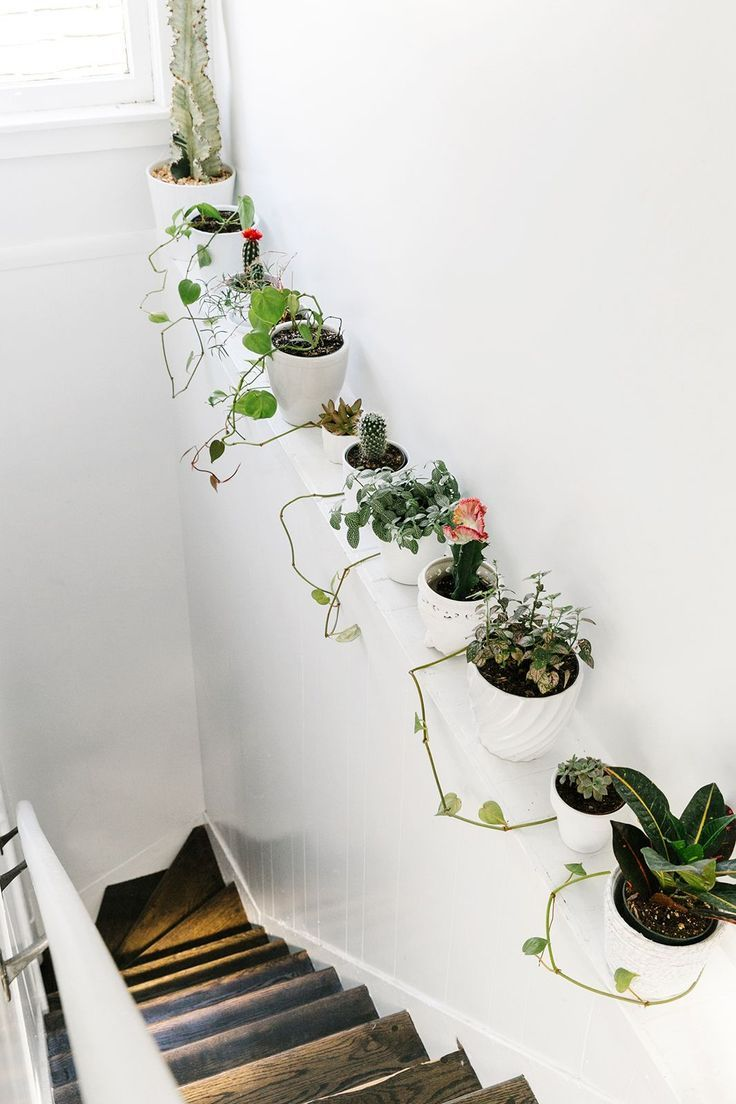 How To Decorate Like A Design Pro Decorating With Plants Green Plants Displayed In The Hallway