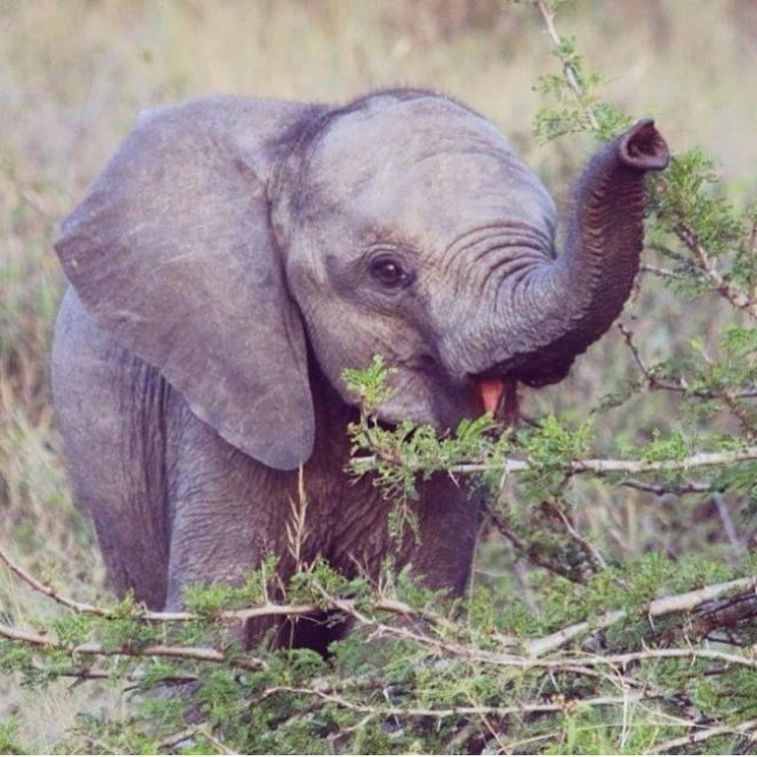 Pin By Usmcmike On Elephants Elephant Elephant Love Cute Baby Animals