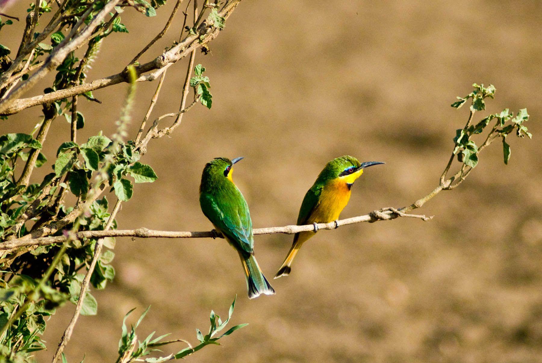 Tanzania - photo by LR