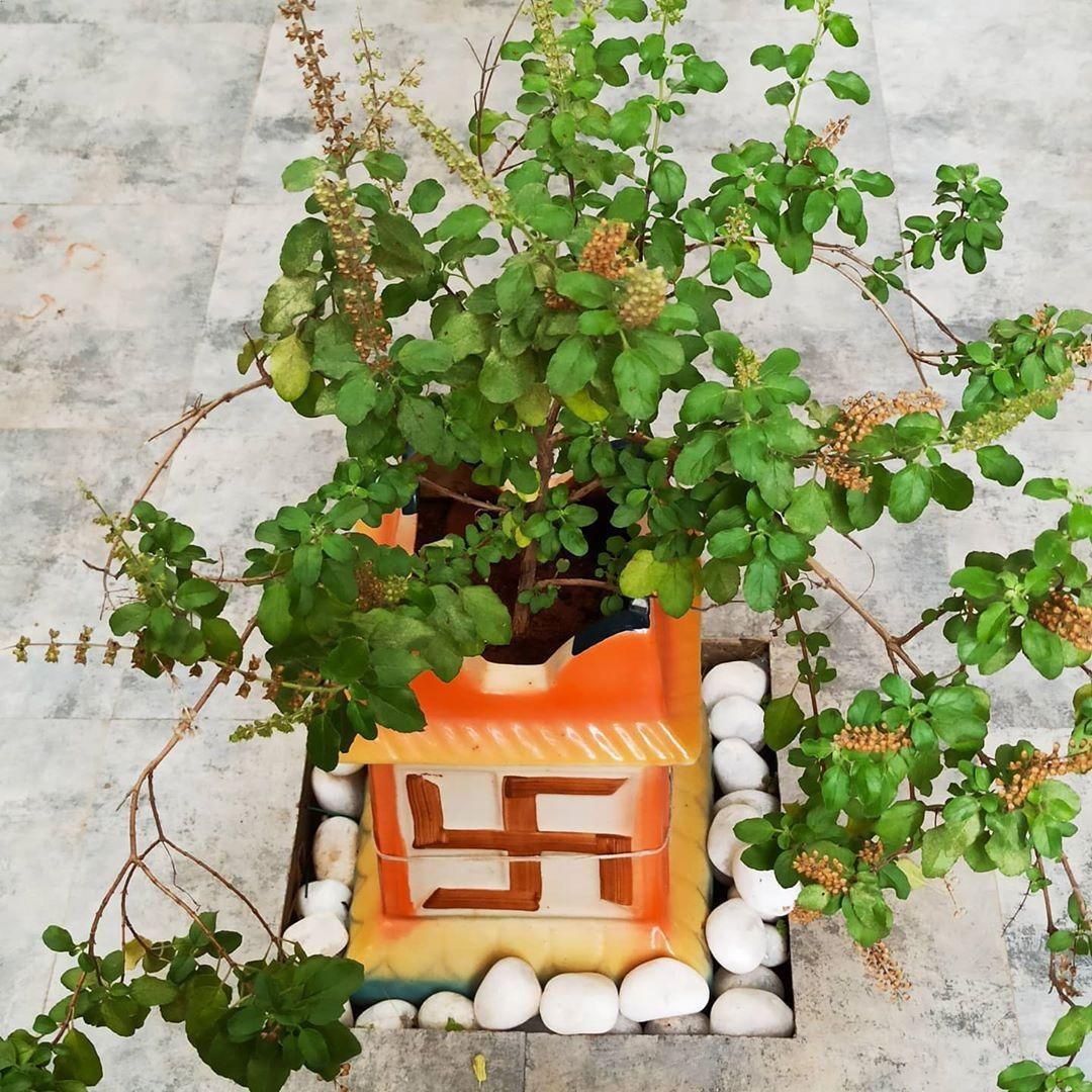 61 Facts Everyone Should Know About Garden Decor in 2020