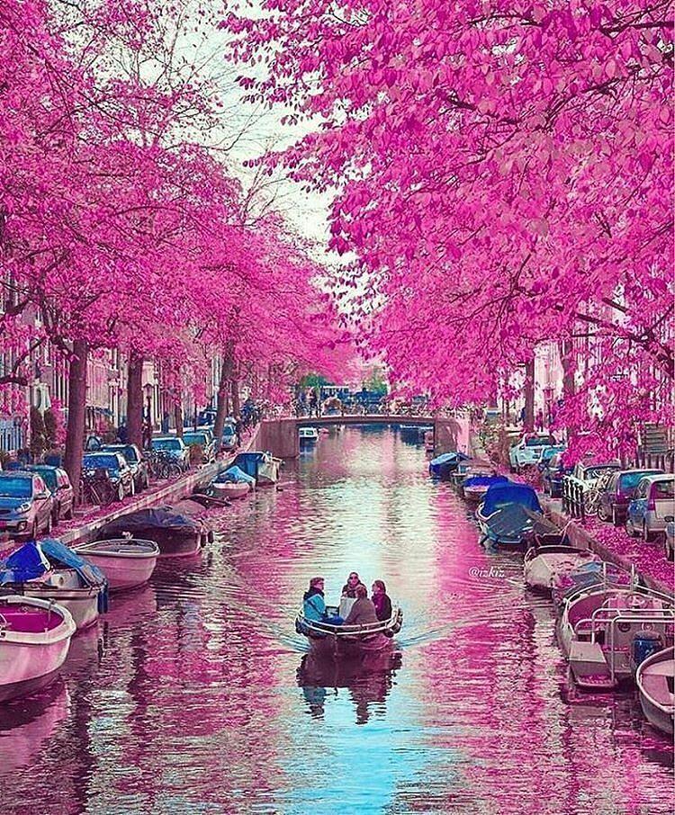 Colours of Amsterdam, Netherlands Photo by izkiz