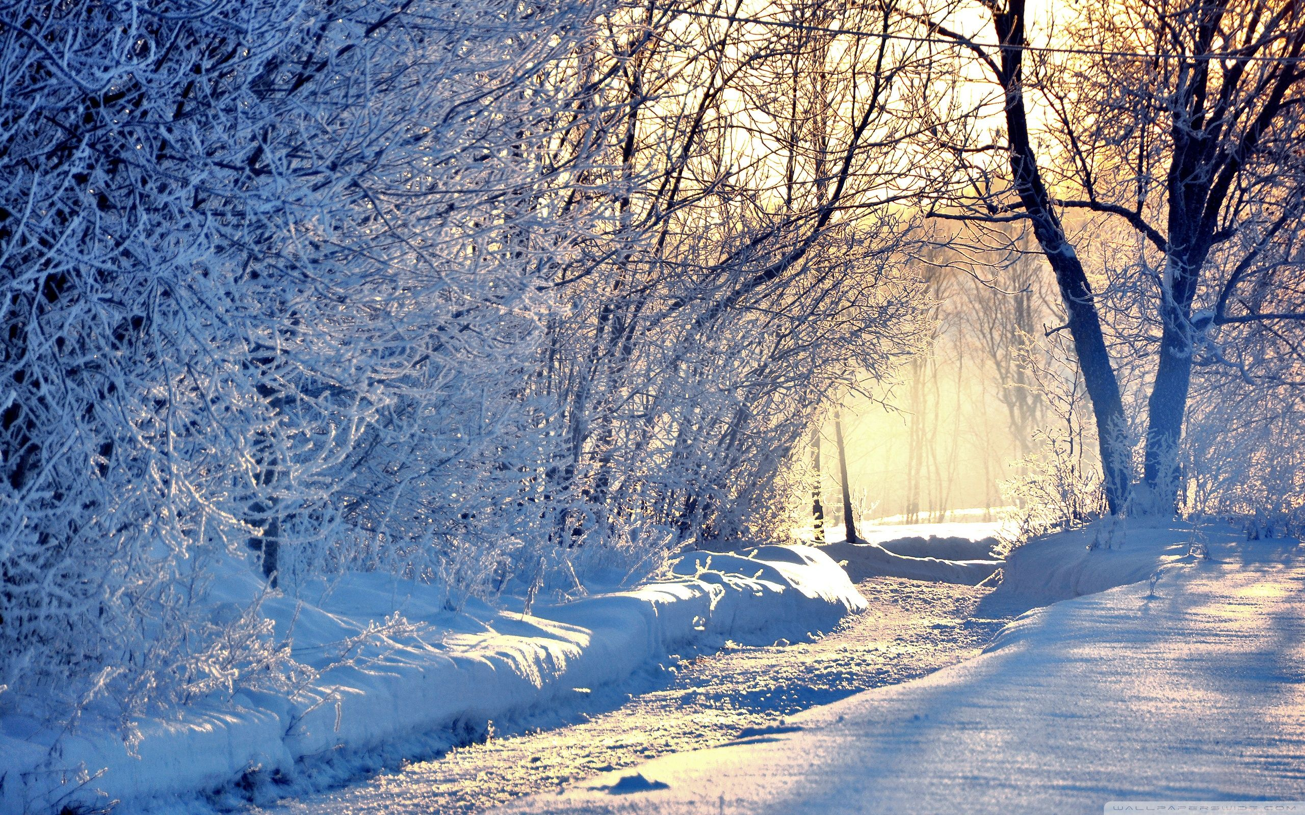 Winter Morning Light Wallpaper Full HD [2560x1600] Free