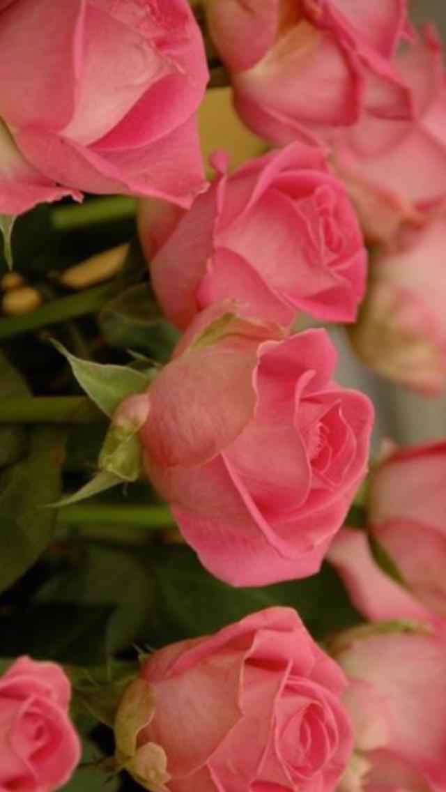 Always Always Beautiful Flowers Around Me My So