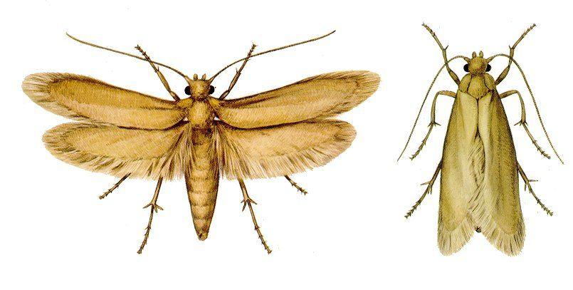 Moth For My Art T Shirt Project Moth Repellent Linen Spray Moth