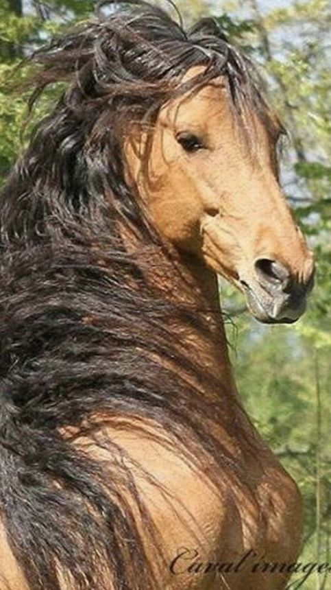 Wow! That's a beautiful who knows they're beautiful.   #horses #beautifulanimals