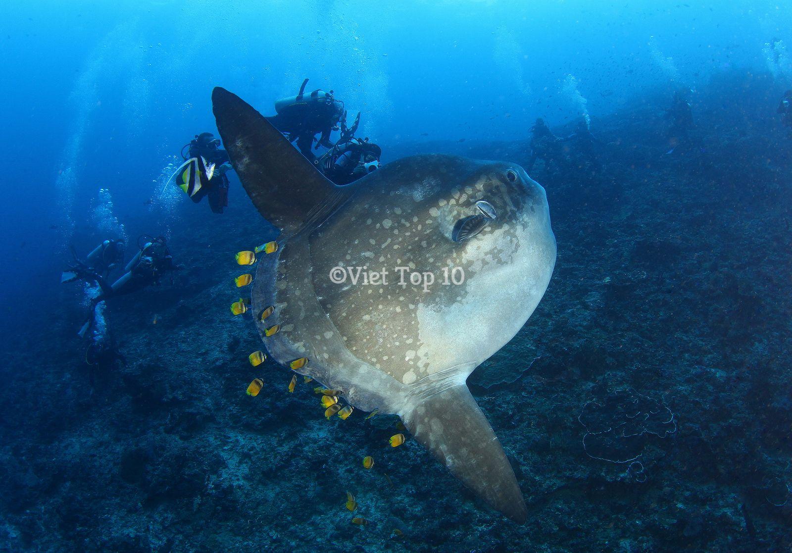 quái vật kỳ dị nhất dưới biển sâu - việt top 10 - viettop10 - viettop10.net