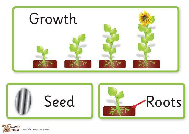 teacher 39 s pet displays plant growth key word cards free downloadable eyfs ks1 ks2. Black Bedroom Furniture Sets. Home Design Ideas